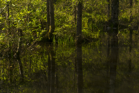 small shady forest lake with reflections of surrounding trees