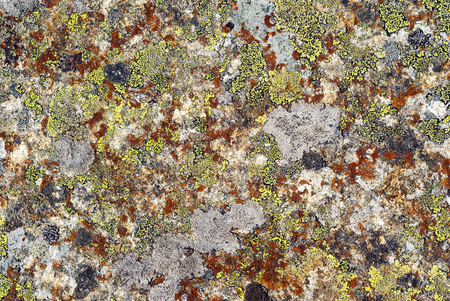 background, texture - surface of wild stone, covered with multi-colored lichen Stok Fotoğraf