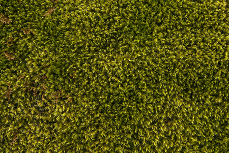 background, texture - natural moss, top view Stock Photo