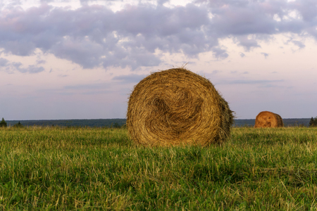 large round bales of hay lays on a beveled meadow Banco de Imagens - 107174578