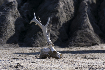 surface of a waterless desert with a skull of an animal in the foreground