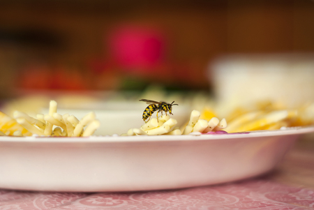 live wasp sits on a plate with cheese sliced, close-up