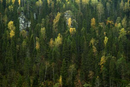 background - the slope of a rocky mountain overgrown with autumn coniferous-deciduous forest