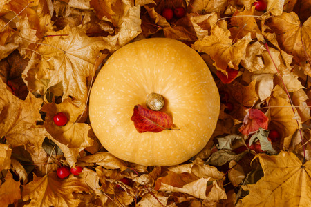 yellow pumpkin among dry autumn leaves and fallen wild apples