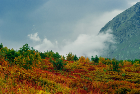 bright mountain pass with rhododendrons, yellow and red autumn vegetation on the background of a gloomy mountain range with clouds