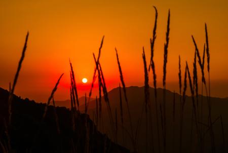 amanecer en las montañas: el sol naciente sobre los picos en el cielo naranja, visible a través de las espiguillas de hierba borrosas en primer plano Foto de archivo