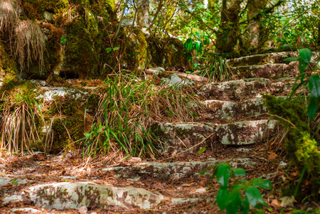 stone steps in ancient ruins overgrown with jungle