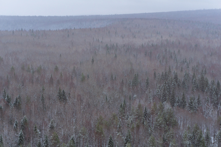 background, landscape - snowy winter forest, taiga, top view