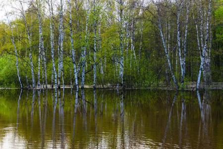 landscape - spring forest flooded during high water