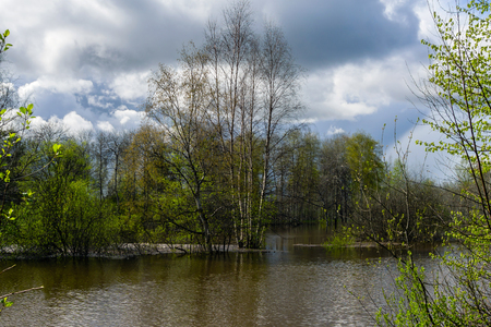 landscape - spring forest flooded during high water Stockfoto