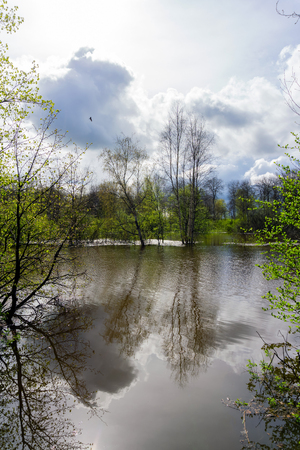 landscape - spring grove of trees flooded during high water