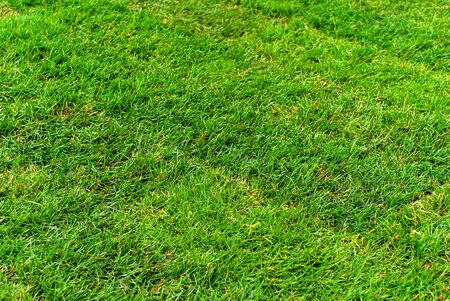 background, texture - freshly laid lawn from rolled turf Stock fotó