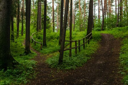 winding dirt paths with railing in a hilly forest