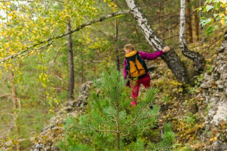 young fir tree in a mountain forest, in the background in the blur a woman with a backpack is engaged in trekking