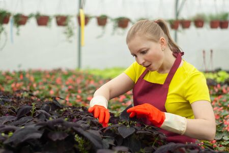 female florist caring for indoor plants in the winter garden
