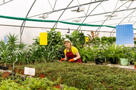 smiling young woman gardener at work in a greenhouse with houseplants Stock fotó