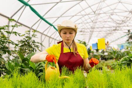 woman florist watering houseplants in a greenhouse Stock fotó