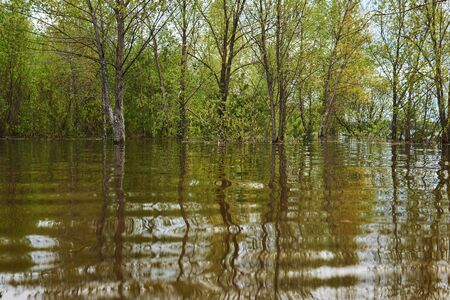 spring landscape during the flood - the grove is flooded, trees stand in the water Archivio Fotografico