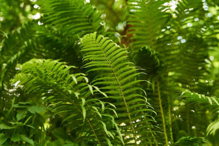 view of fern thickets from the point of view of a forest mouse - from bottom to top