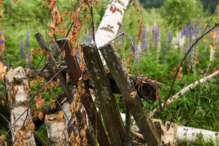 rustic background - a destroyed fence in an abandoned garden on the outskirts