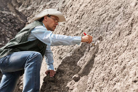 paleontologist extracts fossil bone from a rock by cleaning it with a brush Banco de Imagens