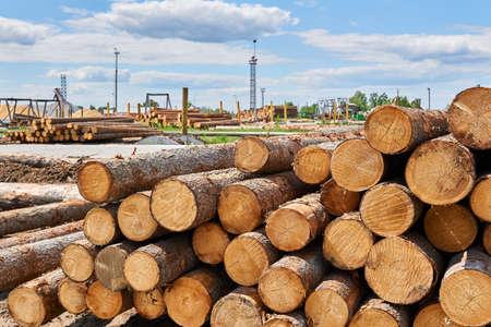 stacks of unbarked logs in a vast lumber yard