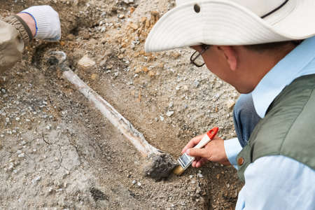 archaeologists in a field expedition clean the excavated bone from the ground Banco de Imagens
