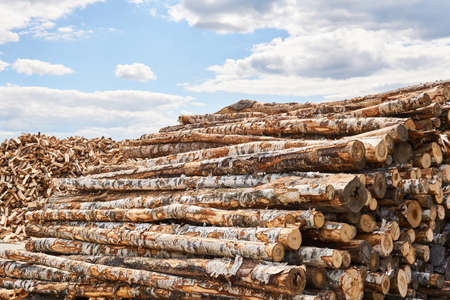 stacks of birch logs and heap of firewood chocks in a vast lumber yard Banco de Imagens