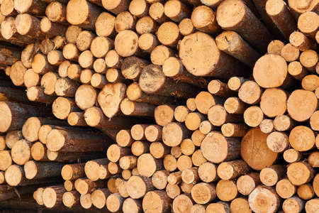 background - ends of stacked birch logs