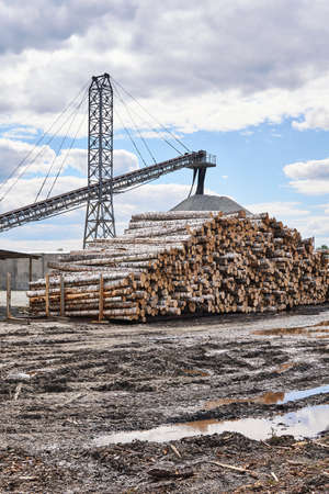 yard of a wood processing factory with with logs and loading conveyors
