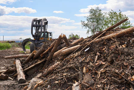pile of old logs intended for recycling and grapple skidder on the background in the yard of a woodworking factory