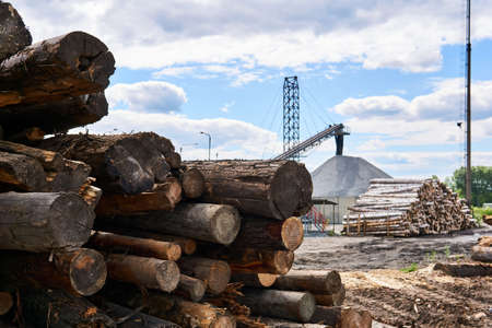 pile of old logs intended for recycling in the yard of a woodworking factory