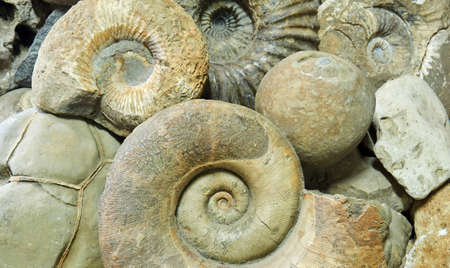 background - ammonite shells, concretions and other paleontological and geological specimens are heaped