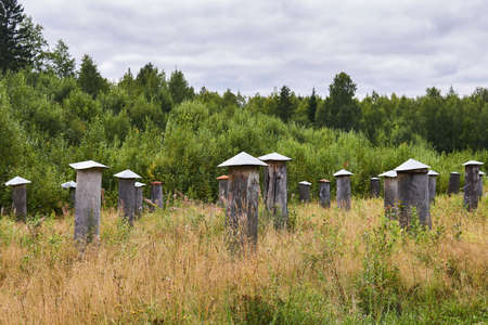 apiary for breeding and selection work with traditional beehives - bee gums or log hives 版權商用圖片