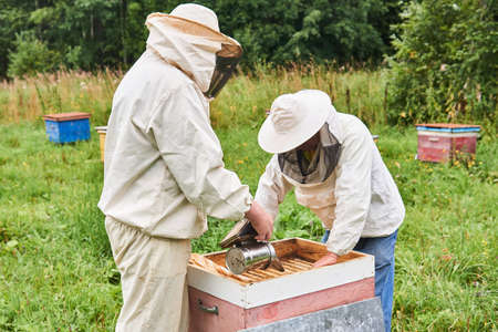 Perm, Russia - August 13, 2020: two beekeepers cheking the hive using a smoker and removing the top cover