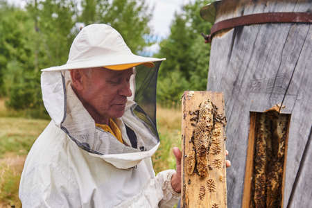 Perm, Russia - August 13, 2020: beekeeper checks a bee colony in a traditional hive inside a log 新聞圖片