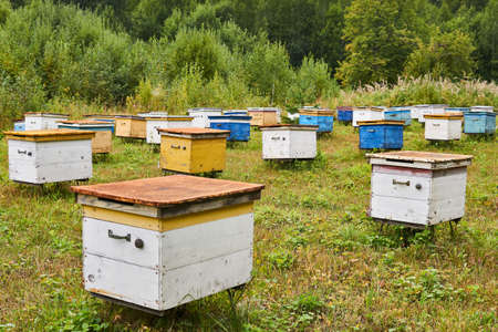 apiary in a forest glade with colorful wooden beehives 版權商用圖片