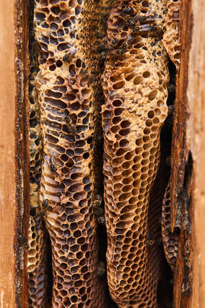 honeycomb of wild bees, having a natural shape, close-up