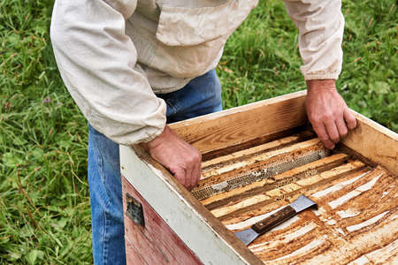 beekeeper removes the honeycomb frame from the opened hive