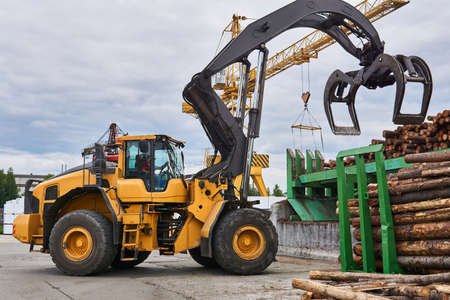 wheeled grapple loader unloads logs onto a feed conveyor in the yard of a woodworking plant Stock Photo