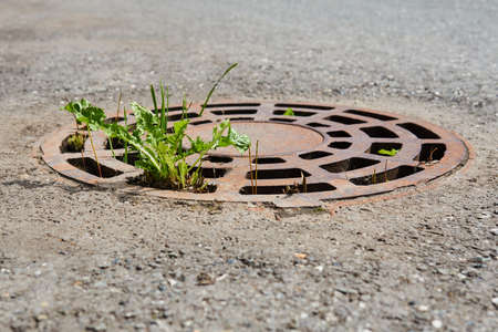 miserable vegetation makes its way through the grated storm sewer hatch in the middle of the asphalt Reklamní fotografie
