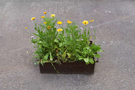 small iron box with wildflowers planted in it stands on concrete