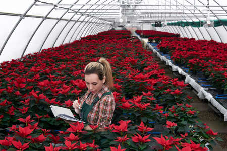young woman agronomist recording the development of poinsettia in the plant nursery in a paper notebook