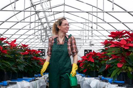 cheerful smiling woman gardener walks through the greenhouse full of red poinsettia flowers Reklamní fotografie