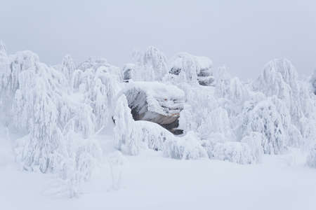 bizarre rocks and trees on a mountain plateau covered in deep snow under a winter sky