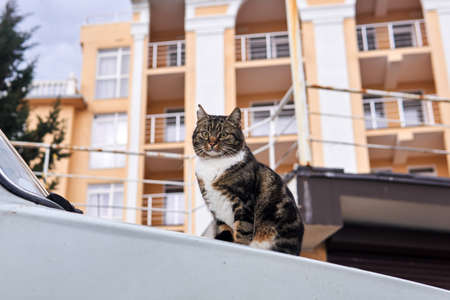 city stray cat sitting on the hood of an car on a blurred city background 스톡 콘텐츠