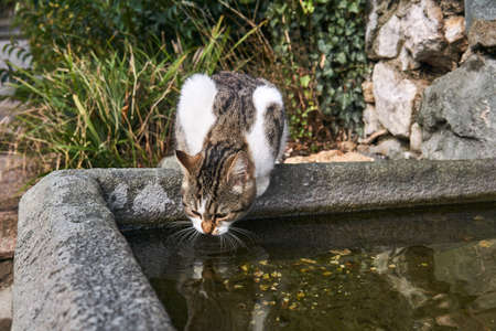 stray cat drinks from a stone bowl in an old park