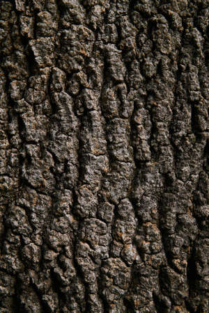 background, texture - rough brown bark of an old tree