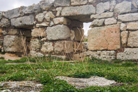 dry stalks of grass against a background of blurry ancient ruins