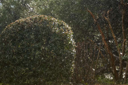 blurred background - sudden snowfall in a subtropical park, bushes and trees are guessed in the background